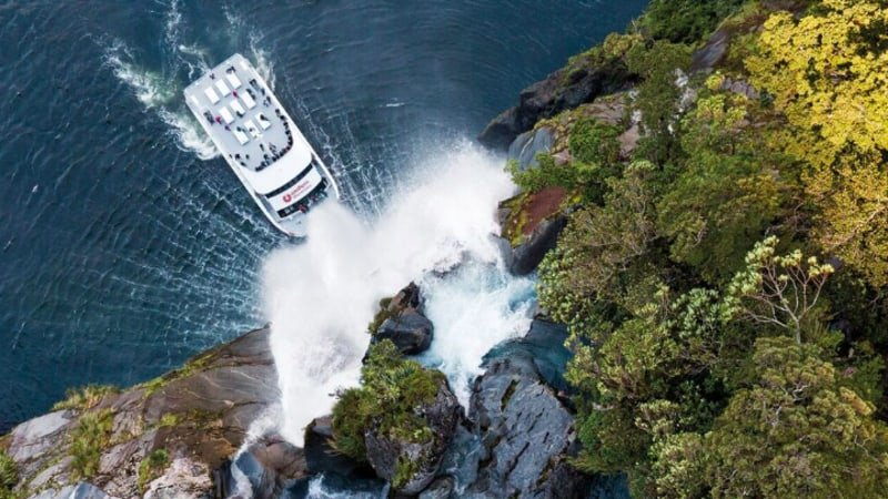 Encounter New Zealand wildlife in the breathtaking environment of Milford Sound from the comfort of Southern Discoveries modern catamaran.
